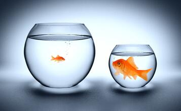Picture of a small fish in a big bowl next to a big fish in a small bowl, which symbolizes the importance of finding the right-size call center partner.